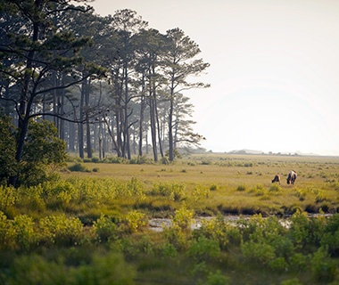 The Eastern Shore, Virginia