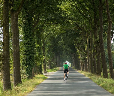 a cyclist riding in a tree lined lane in Belgium