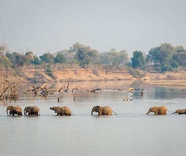 elephants crossing a river in Zambia