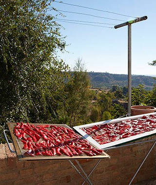 201406-ss-basilicata-sundried-peppers