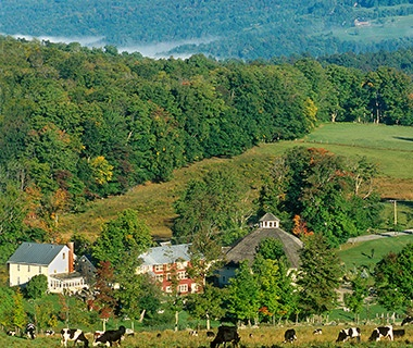 cattle grazing in the green hills of Vermont