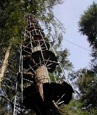 Cedar Creek Treehouse Observatory, Washington
