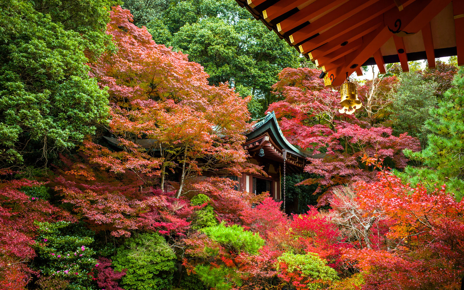 Fall Travel and Leaf-Peeping in Japan| Travel + Leisure
