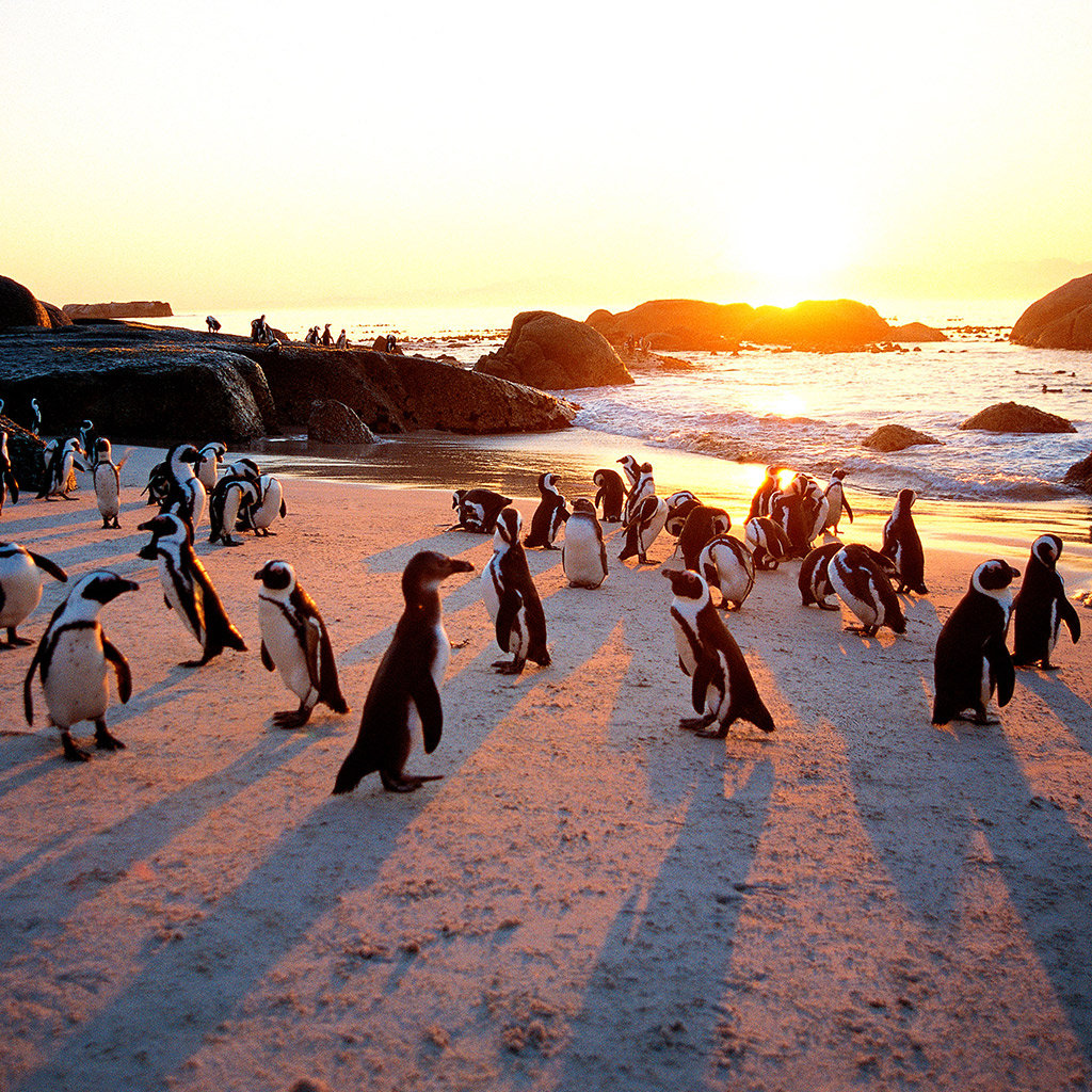 Best Beaches in Cape Town  Travel + Leisure