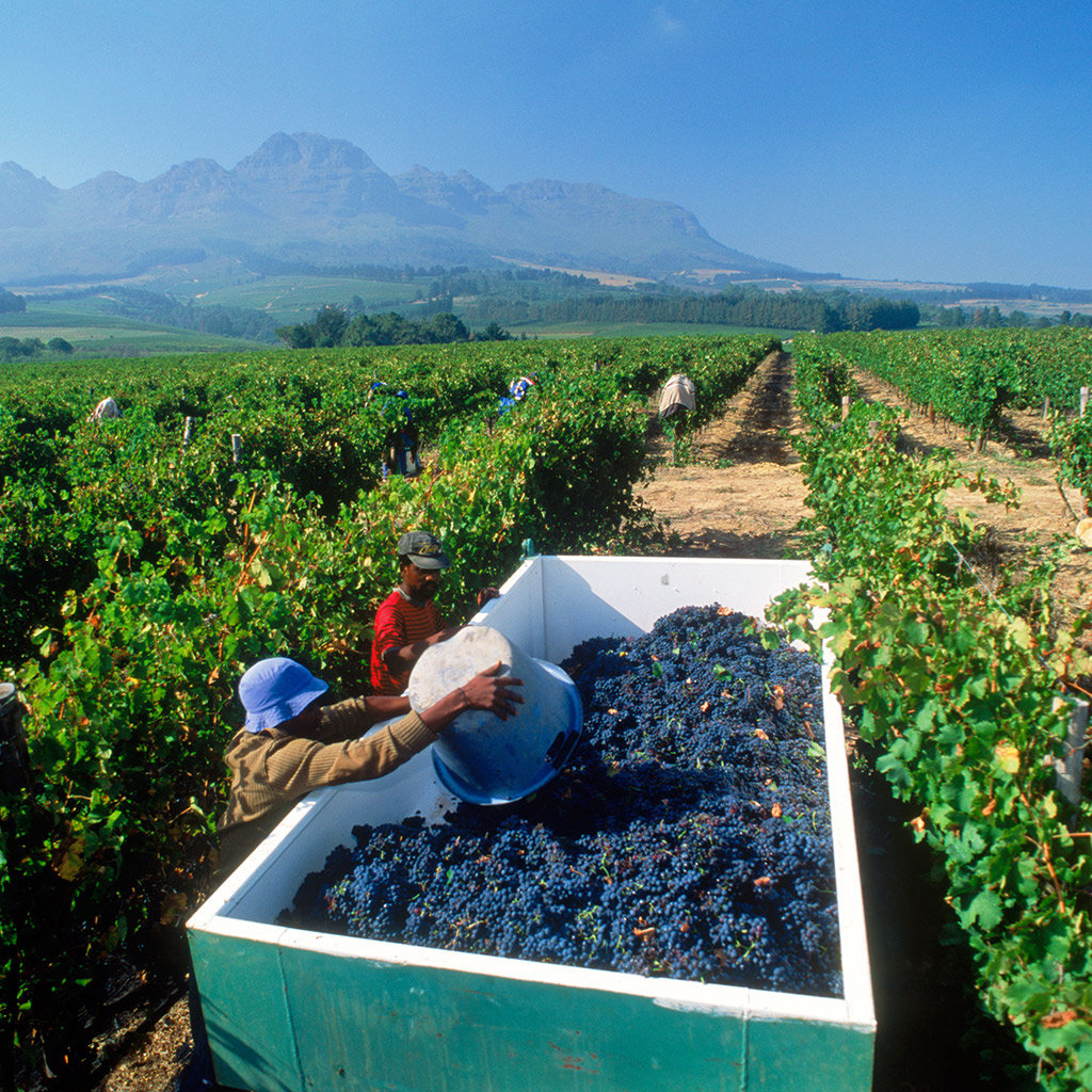 Best Day Trips from Cape Town
