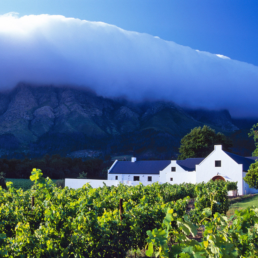 Best Vineyards in the Winelands