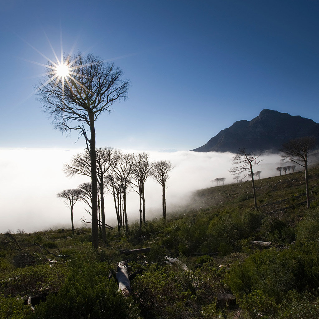 Best Winter Activities in (and around) Cape Town