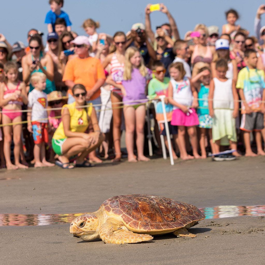 Best Family Attractions in Charleston