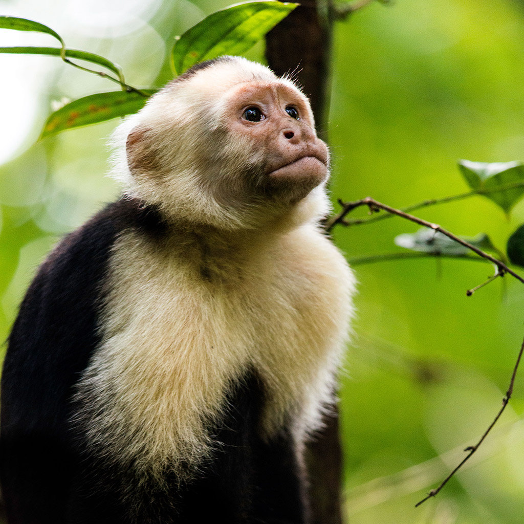 Best Family-Friendly Eco Tours in Costa Rica