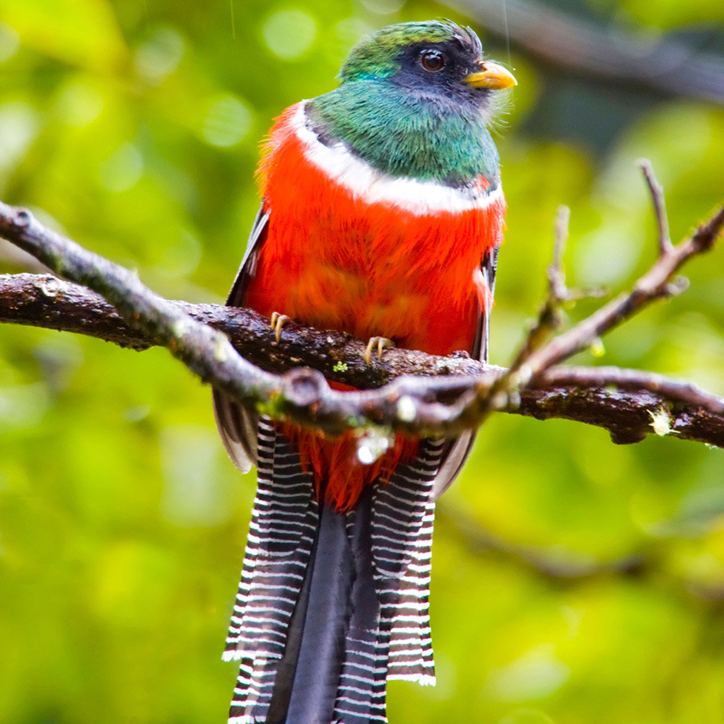 best places to go bird watching in costa rica travel leisure