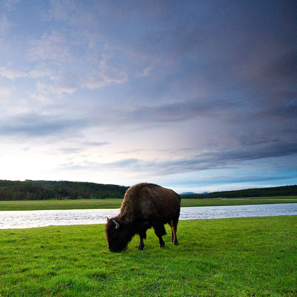 Best Places to Spot Wildlife in Jackson Hole