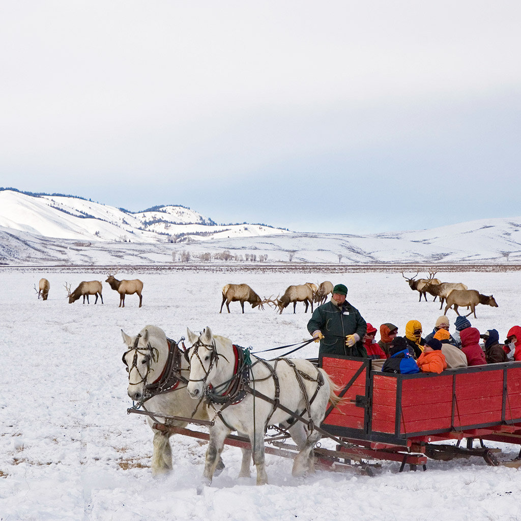 Best Tours in Jackson Hole