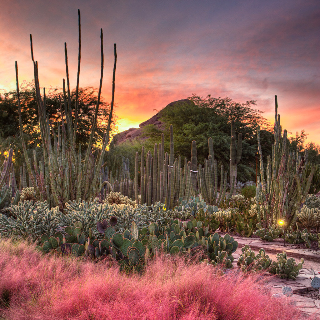 Top Outdoor Attractions in Scottsdale