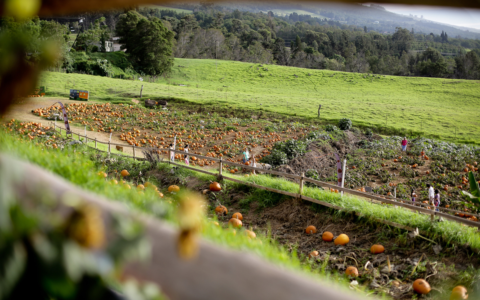 Pumpkin Farm Hawaii
