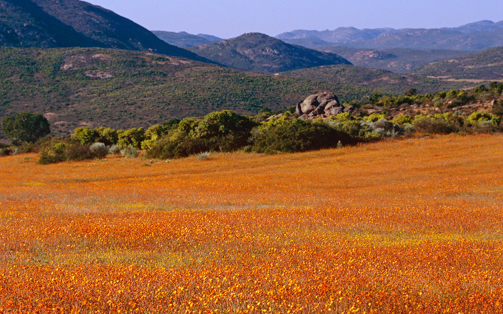 Hike Through Wildflowers in Namaqualand