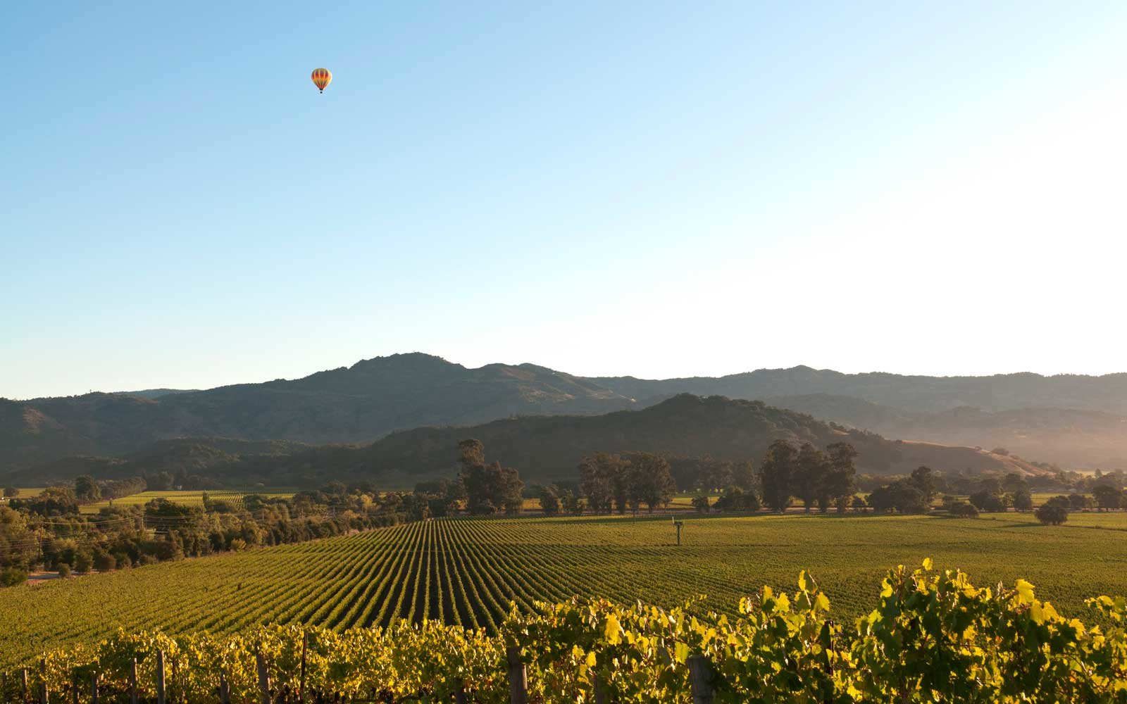 Vineyards of Napa Valley, California