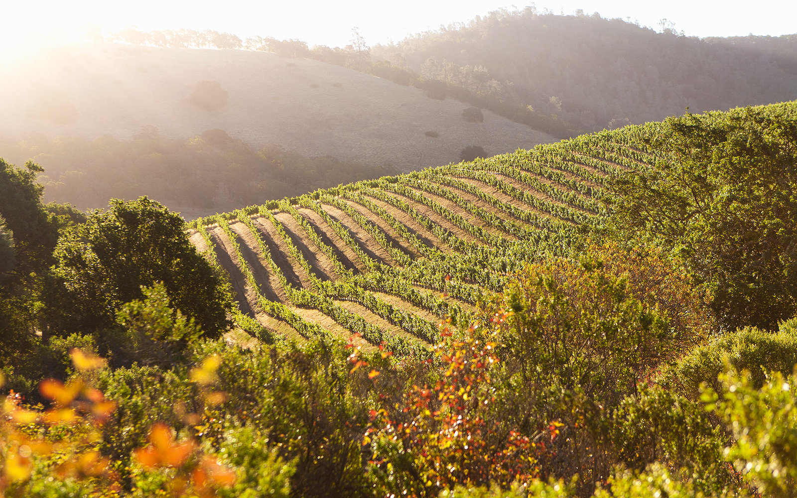 What to Do and See in Napa Valley   Travel + Leisure
