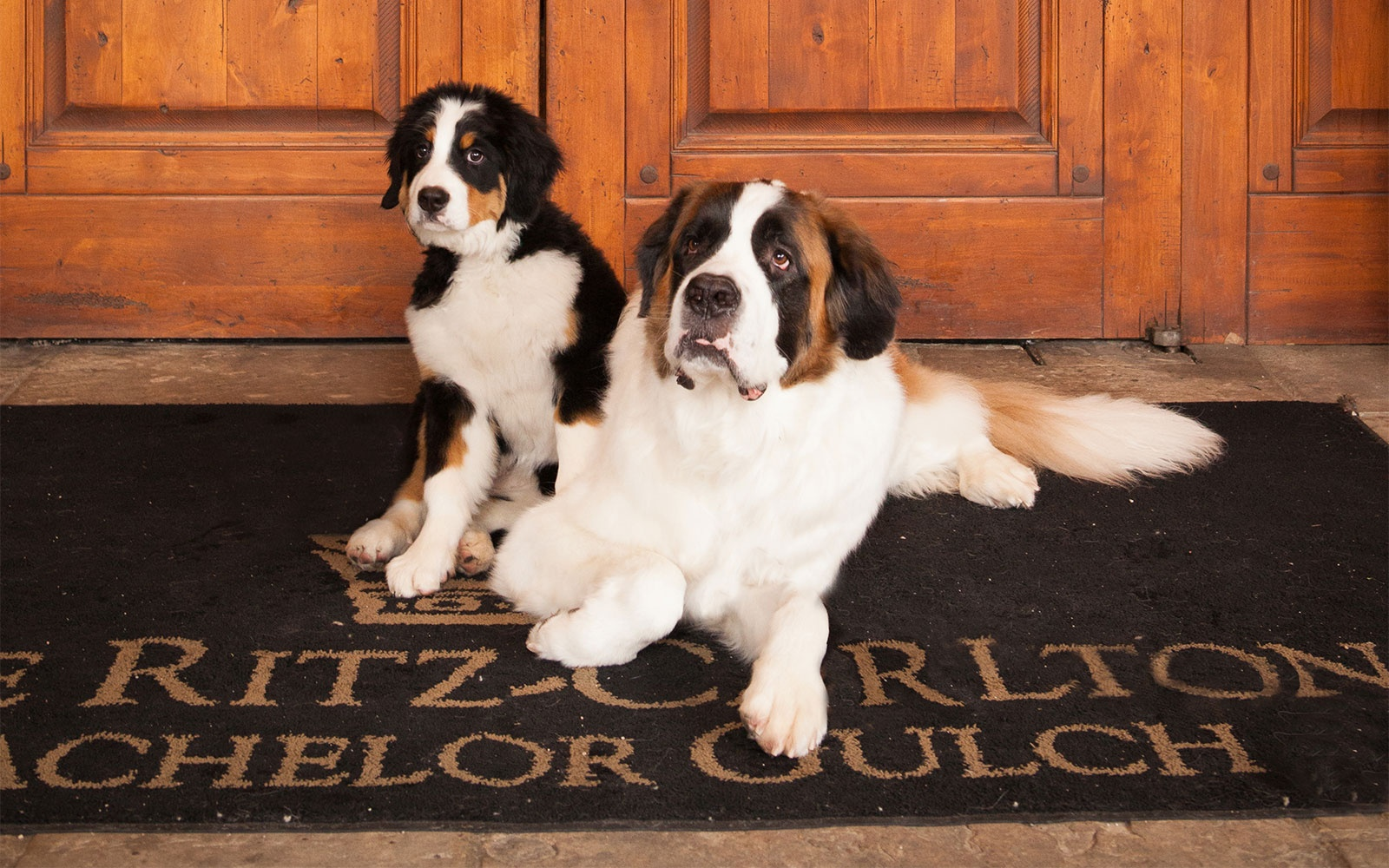 The Ritz-Carlton Bachelor Gulch PET FRIENDLY HOTEL