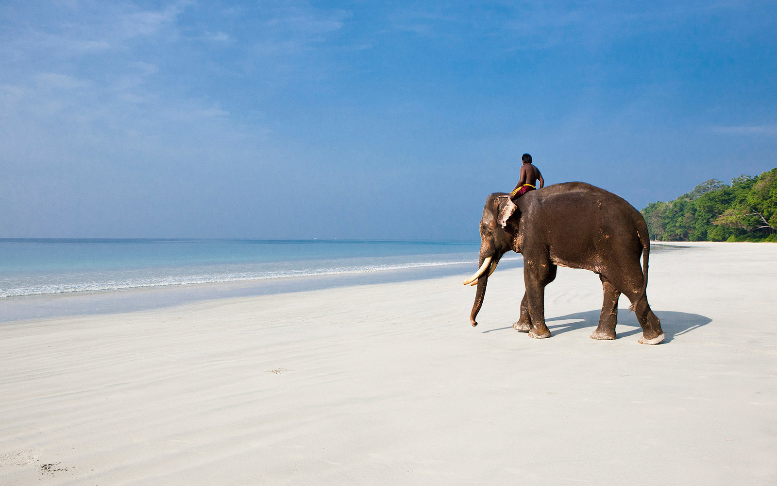 Elephant Beach Havelock Island Hotels