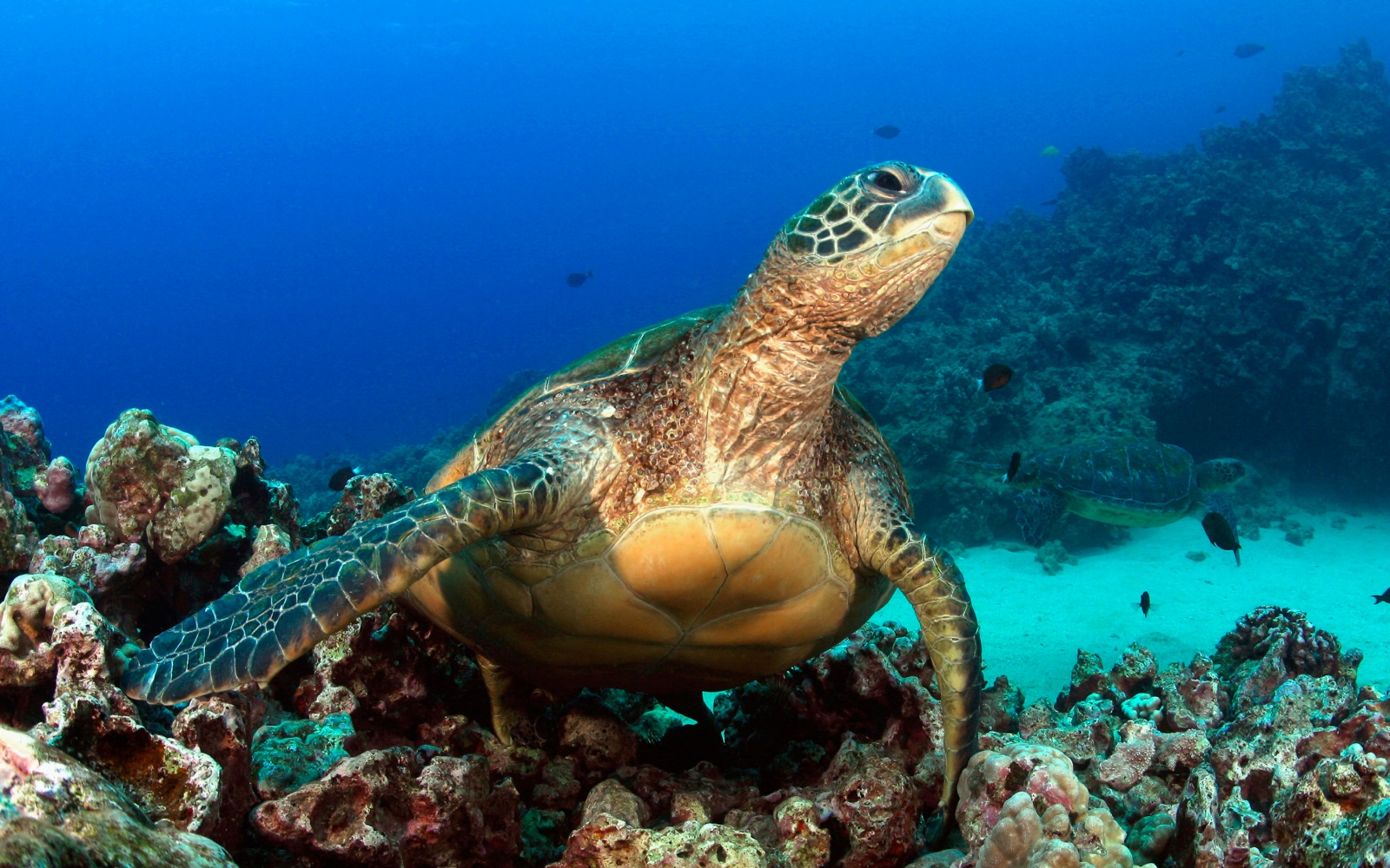 Best Off Beach Snorkeling In The Caribbean