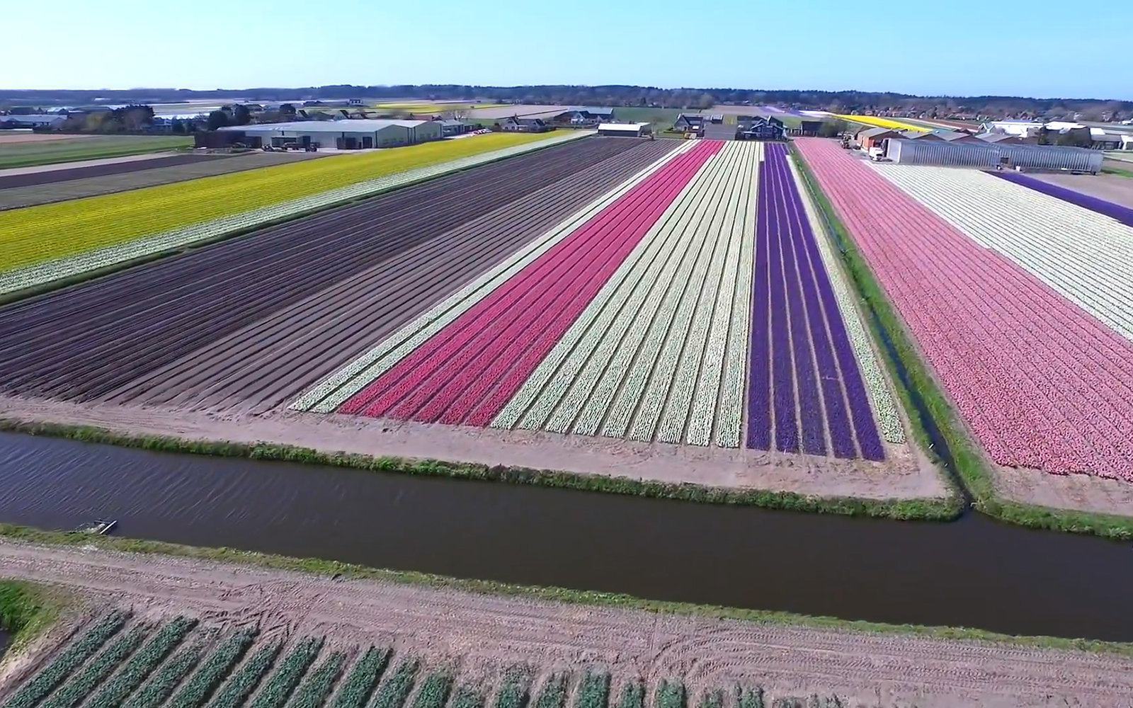 Video flower fields in the netherlands travel leisure an aerial tour of the most beautiful flower fields in the netherlands izmirmasajfo