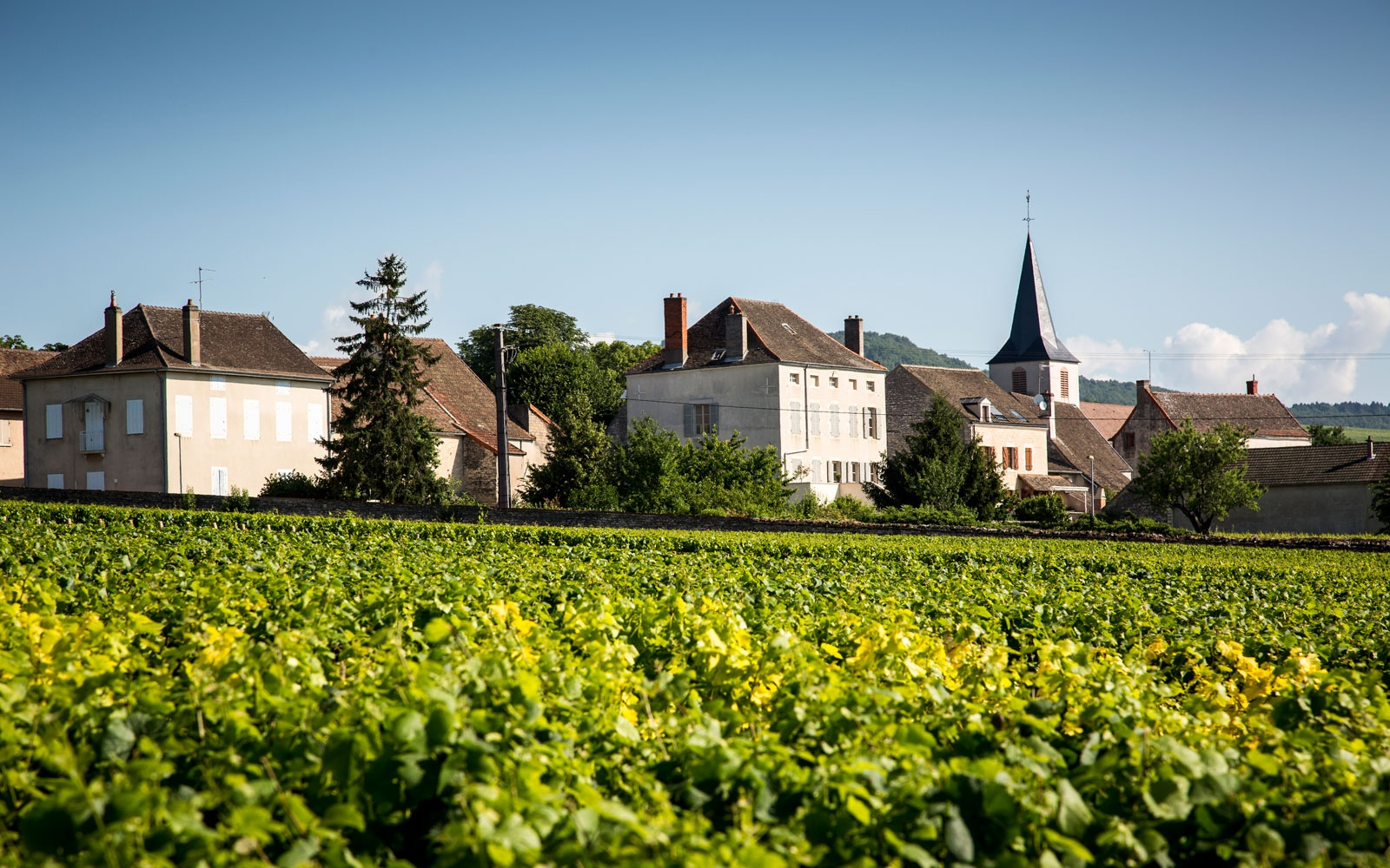 Montrachet Vineyard, Burgundy, France