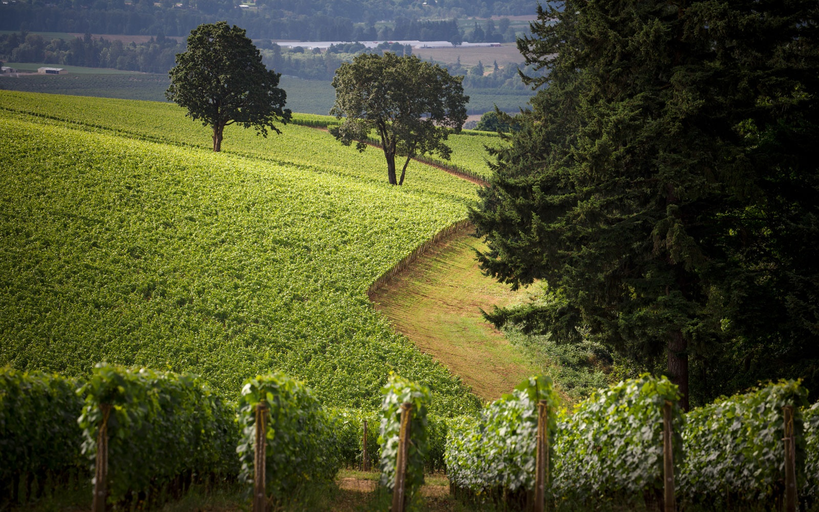 Pinot Path: Route 99-W, Willamette Valley, Oregon