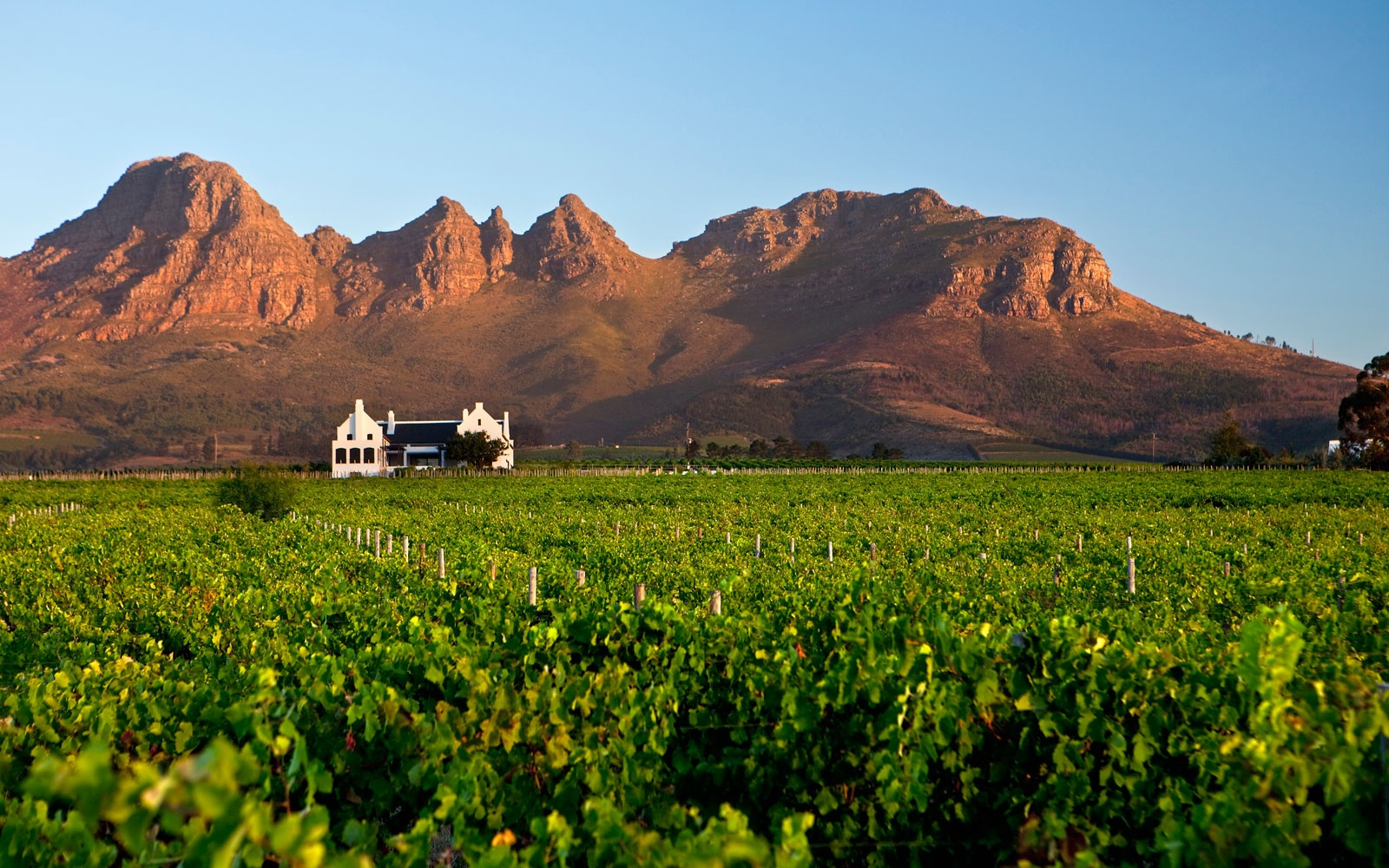 Stellenbosch Wine Route, Stellenbosch, South Africa