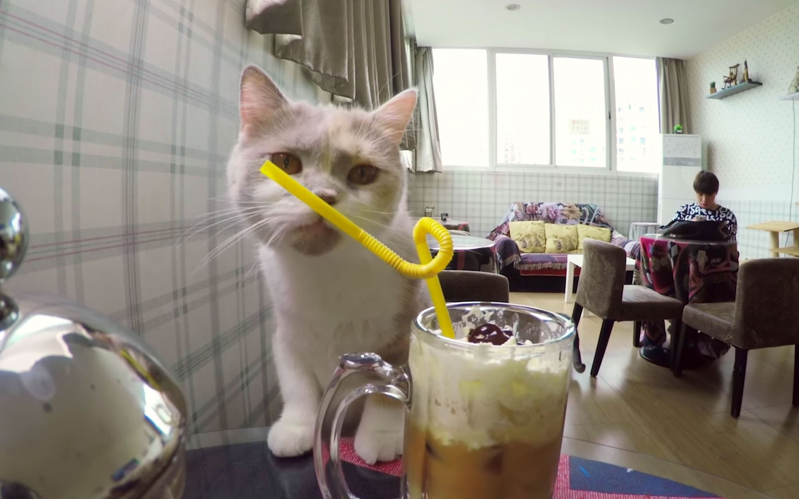 Video Of Shanghai S Cat Caf 233 Travel Leisure