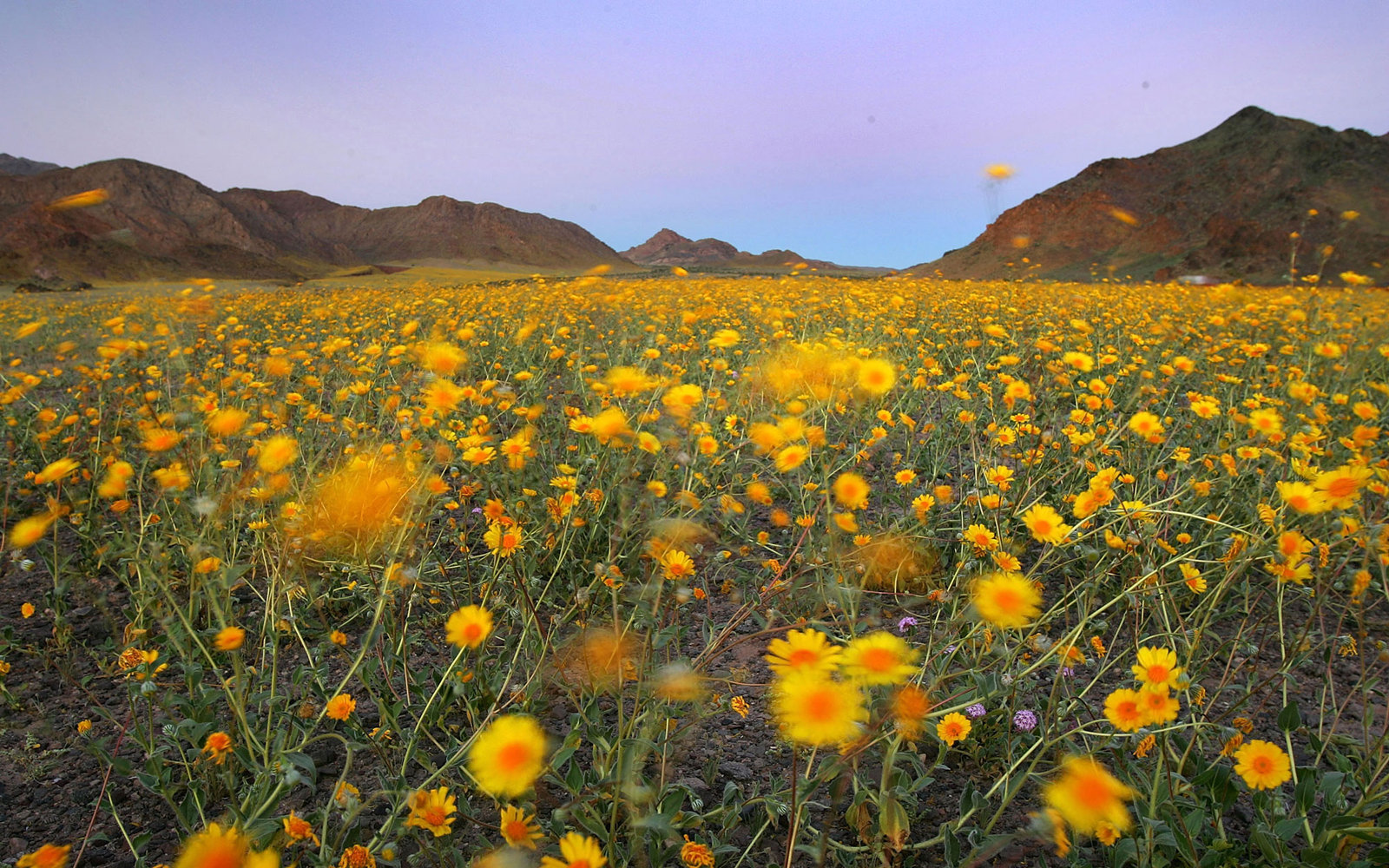 Death Valley Gears Up For A Super Bloom Travel Leisure