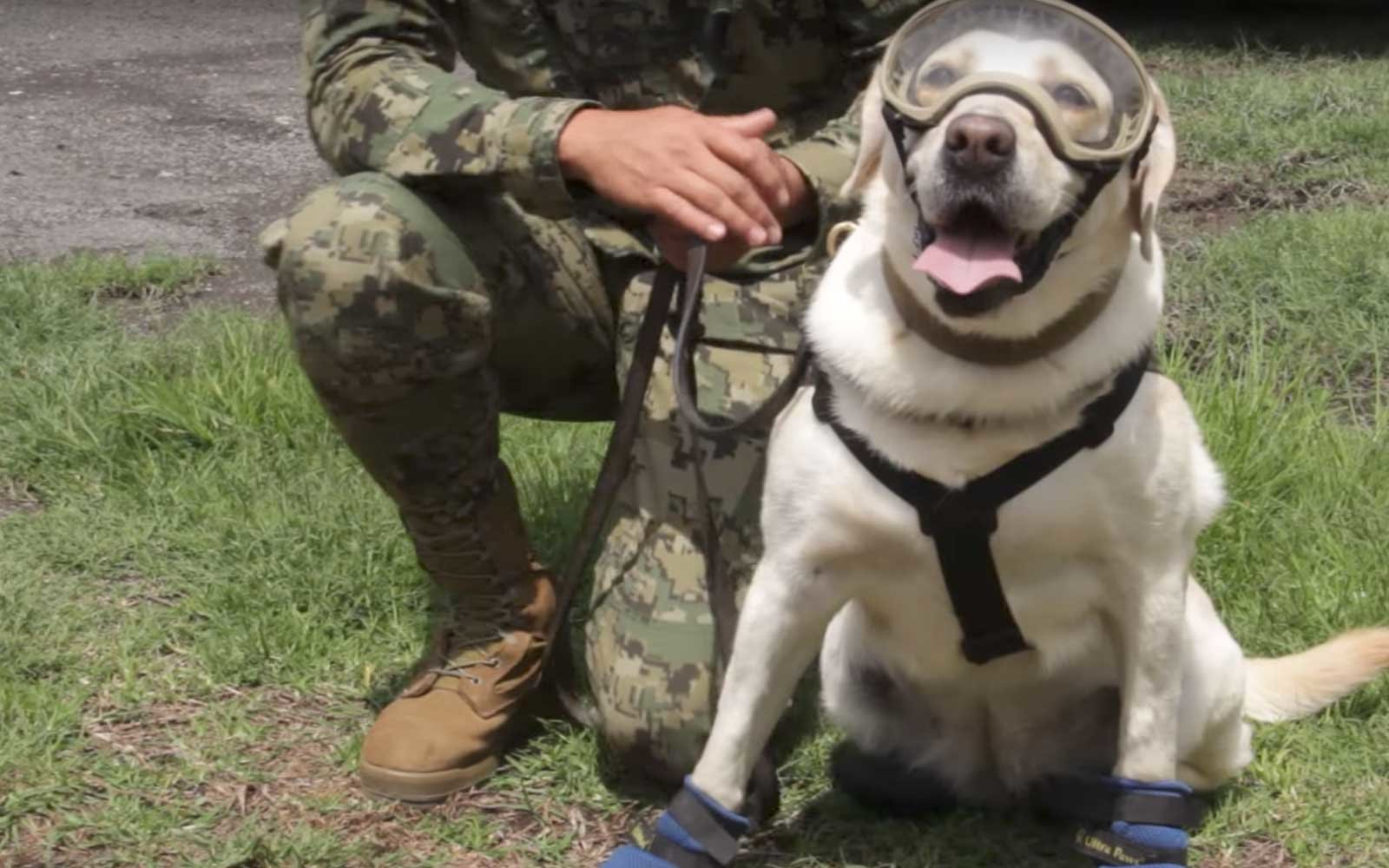 A Heroic Dog Named Frida Is Saving Lives In Mexico After