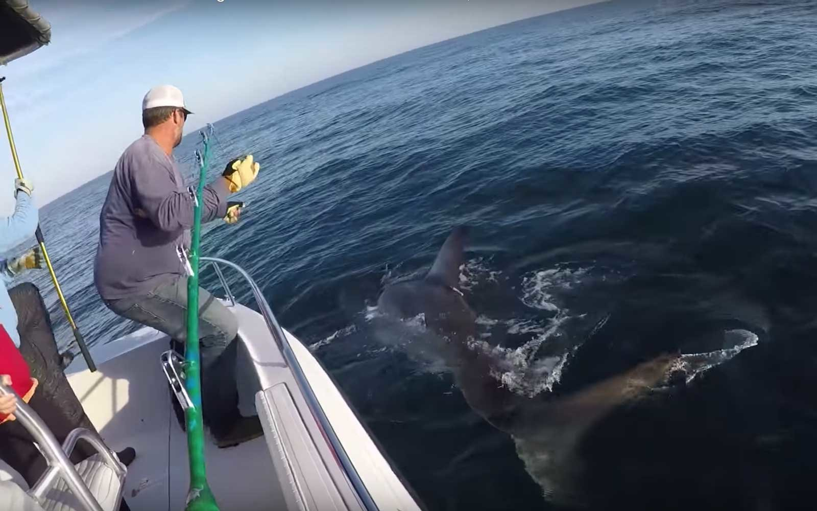 A 3,000-pound Great White Shark Was Caught Off the Coast of South Carolina