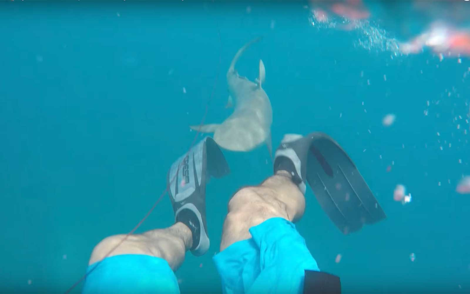 Watch This Fisherman Film His Own Brutal Shark Attack In