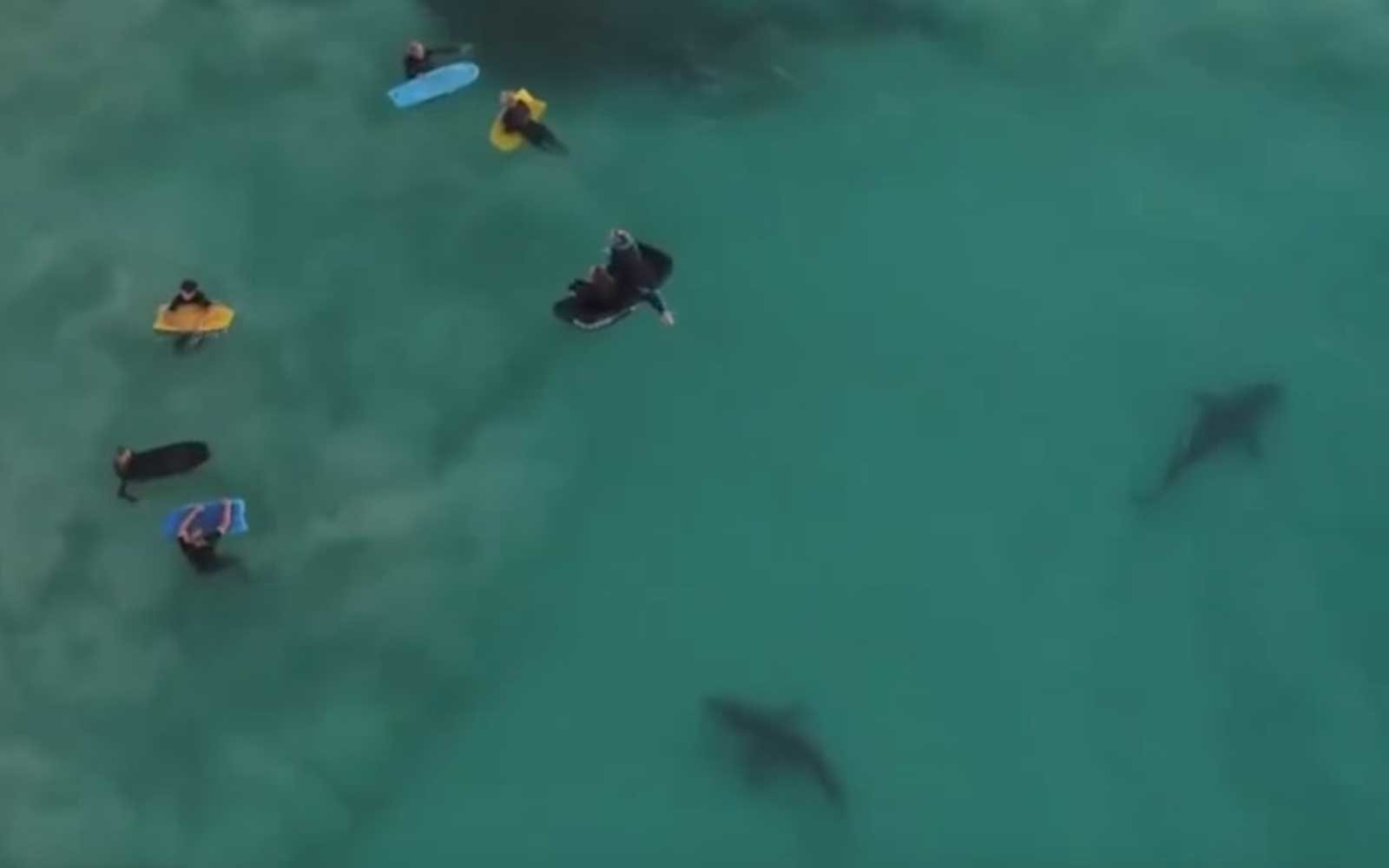 Drone Captures Hundreds Of Sharks Swimming Beneath Unsuspecting Children Travel Leisure
