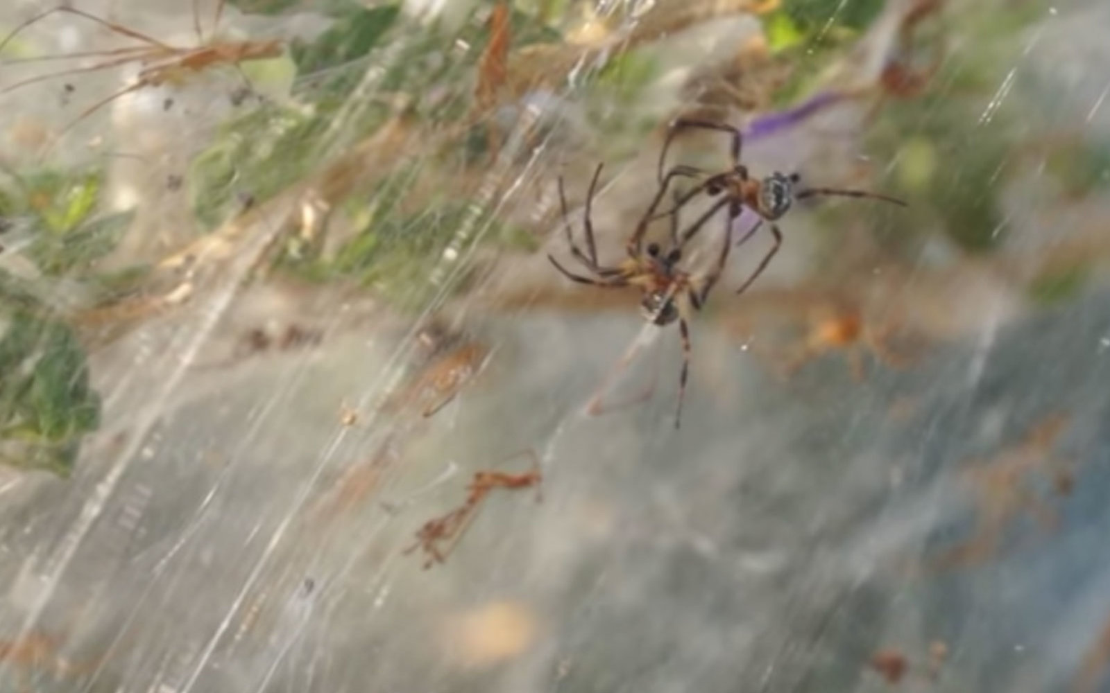 Thousands Of Spiders Covered This Greek Town In Spooky