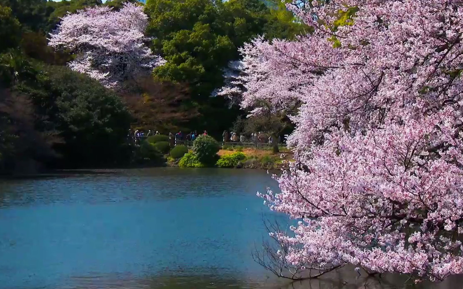 VIDEO: Five Things to Do in Tokyo