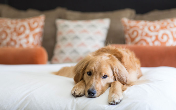 The best hotels for a vacation with your dog travel for Dog friendly hotel nyc