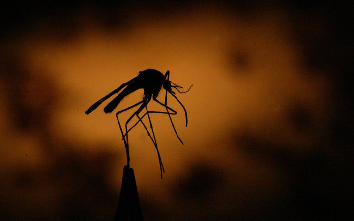 Zika To Arrive in US