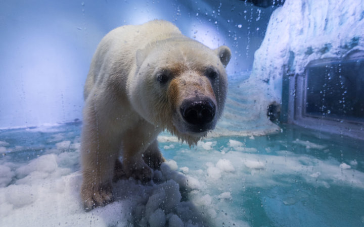 A Wildlife Park Wants to Rescue Pizza the Polar Bear From a Mall in China