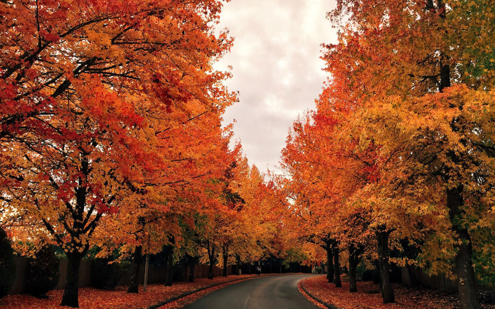 Here's What Forecasters Are Predicting for Fall Weather