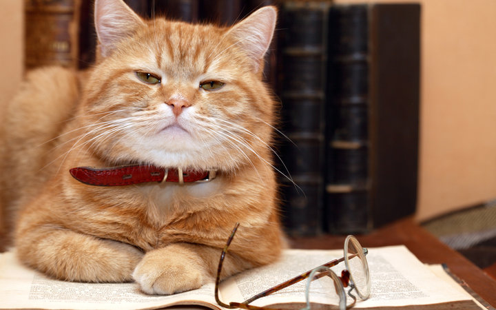 Cats Are As Smart As Dogs