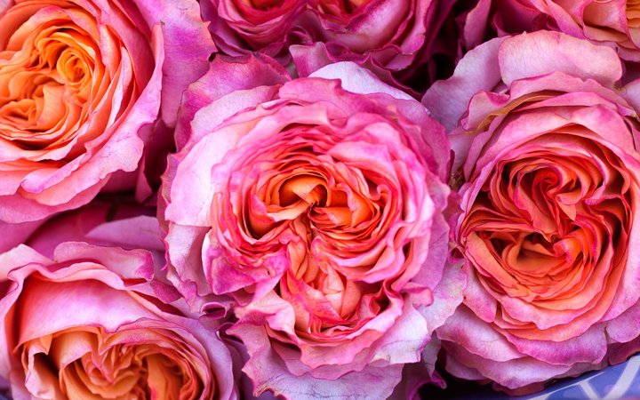 Amazon Is Offering Free One-Hour Flower Delivery for Valentine's Day