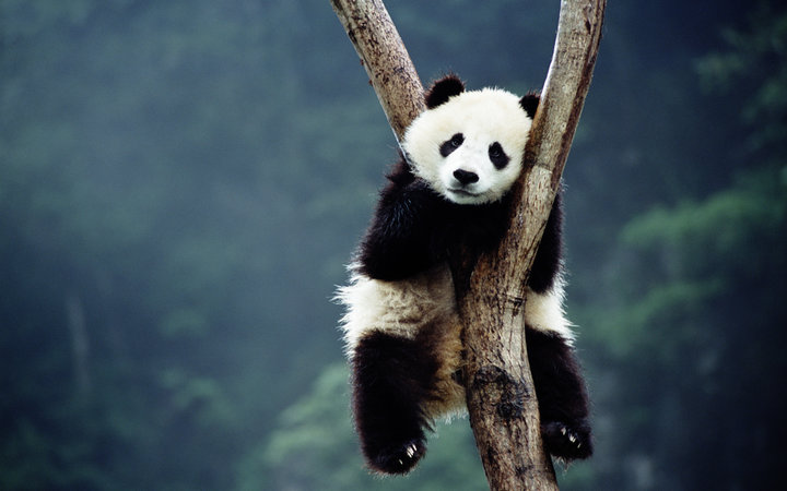 This Is Why Pandas Are Black and White
