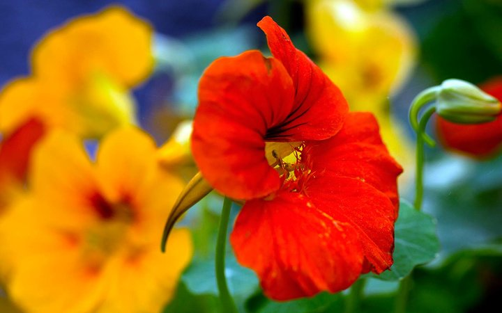 Plants That Repel Bugs and Mosquitoes