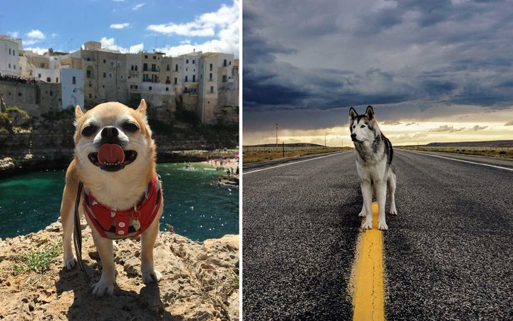 Travel Instagram Dogs