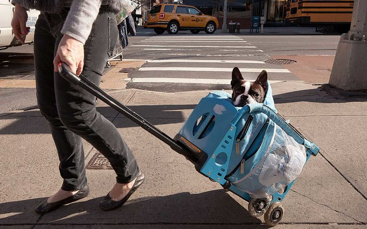 A woman walks with a dog in a wheeled carrier in the Manhattan borough of New York, New York, USA.