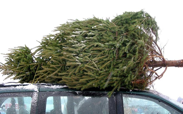 Police Stop Car Carrying Massive Christmas Tree Home That Would Make Clark Griswold Jealous