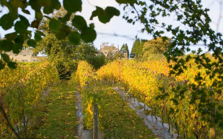 Camel Valley Vineyard in Autumn