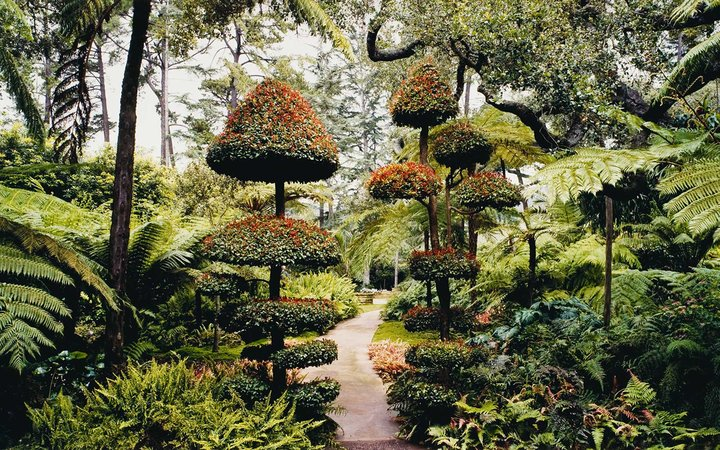 John Pfahl, Fern Garden with Topiary