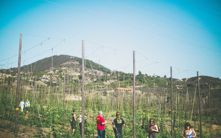 Nopalito Hops Farm and Orchard in San Diego